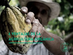6 Ventajas de la agricultura orgánica